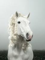 hairdresser horses