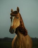 hairdresser horse